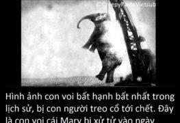 Hình ảnh con voi bất hạnh nhất trong lịch sử | Tin Tức Rùng Rợn | Thị Trấn Buồn Tênh