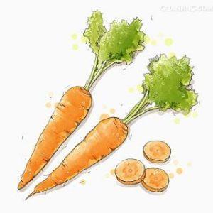 Cắt cà rốt thành miếng à? - Khương Nan Cật